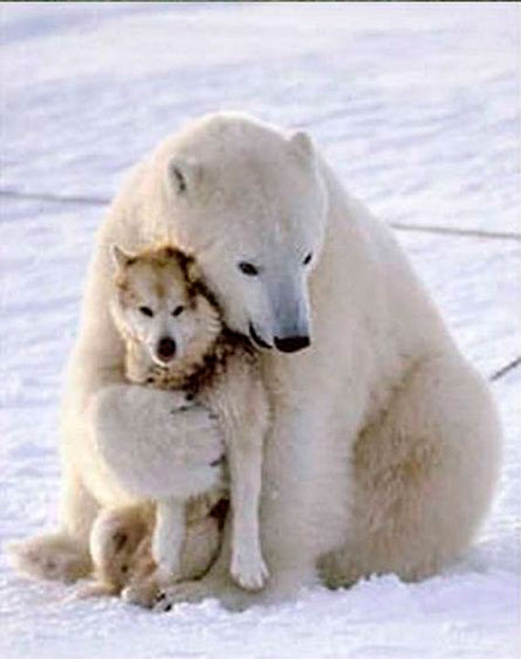 AnimalFriendship1