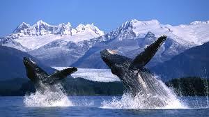Alaska_image1