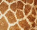 Skin-Pattern2