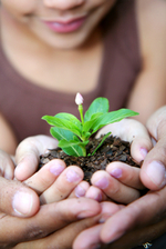Hands-planting-seeds