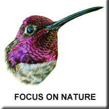 Focus-on_Nature